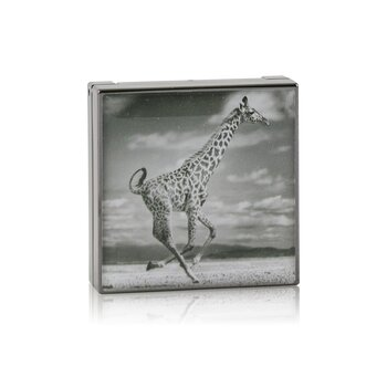 Chantecaille Luminescent Eye Shade - # Giraffe (Burnished Brown)
